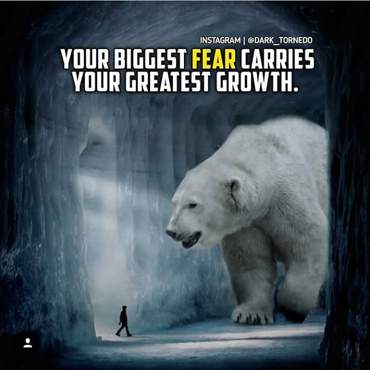 Bears Quotes And Saying
