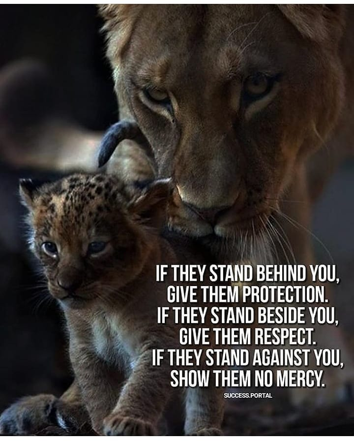 Lion Quotes Images